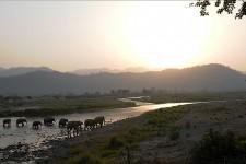 ASIAN ELEPHANT HERD